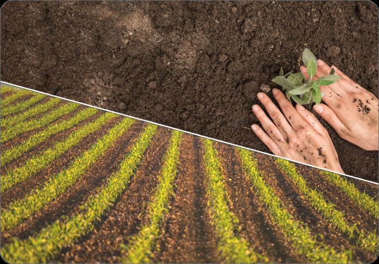 Agriculteur traitant ses champs avec de la terre de diatomées