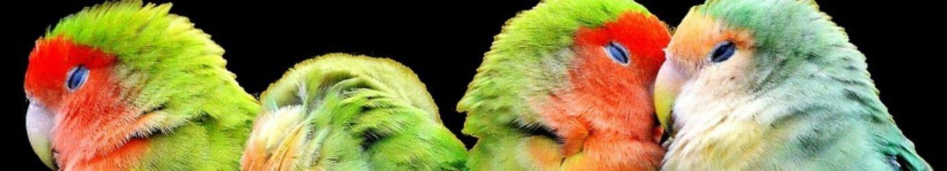 Terre de diatomées pour oiseaux.