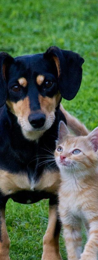 Chien et chat avant d'être vermifugés avec de la poudre de terre de diatomées