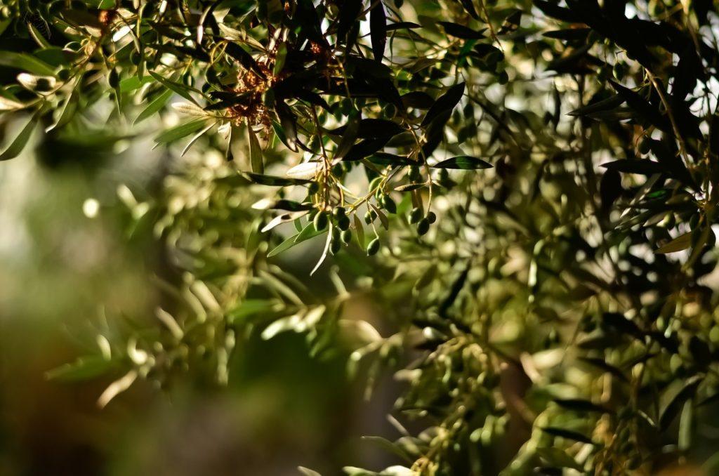 Eco terre de diatomées contre le fléau du scarabé.