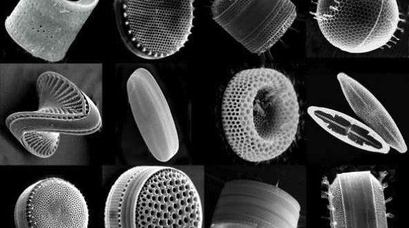 Microscope terre de diatomées
