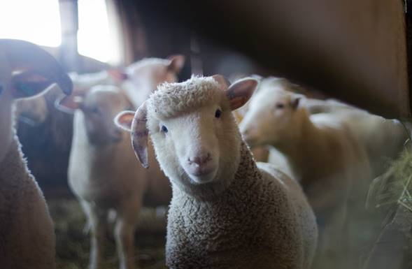 Contre-indications de l´utilisation de terre de diatomées pour animaux de fermes.
