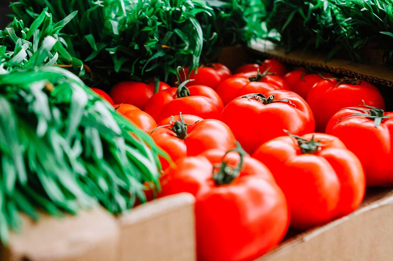 Terre de diatomées pour l´agriculture des tomates.