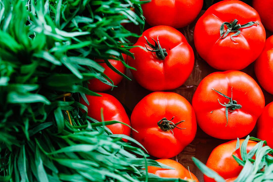 Terre de diatomées pour cultiver les tomates.