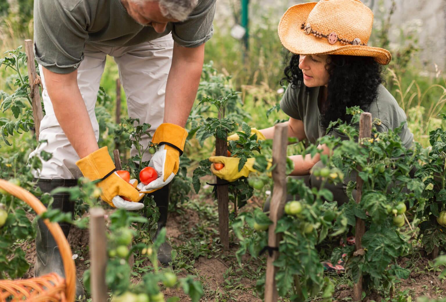 insecticide organique
